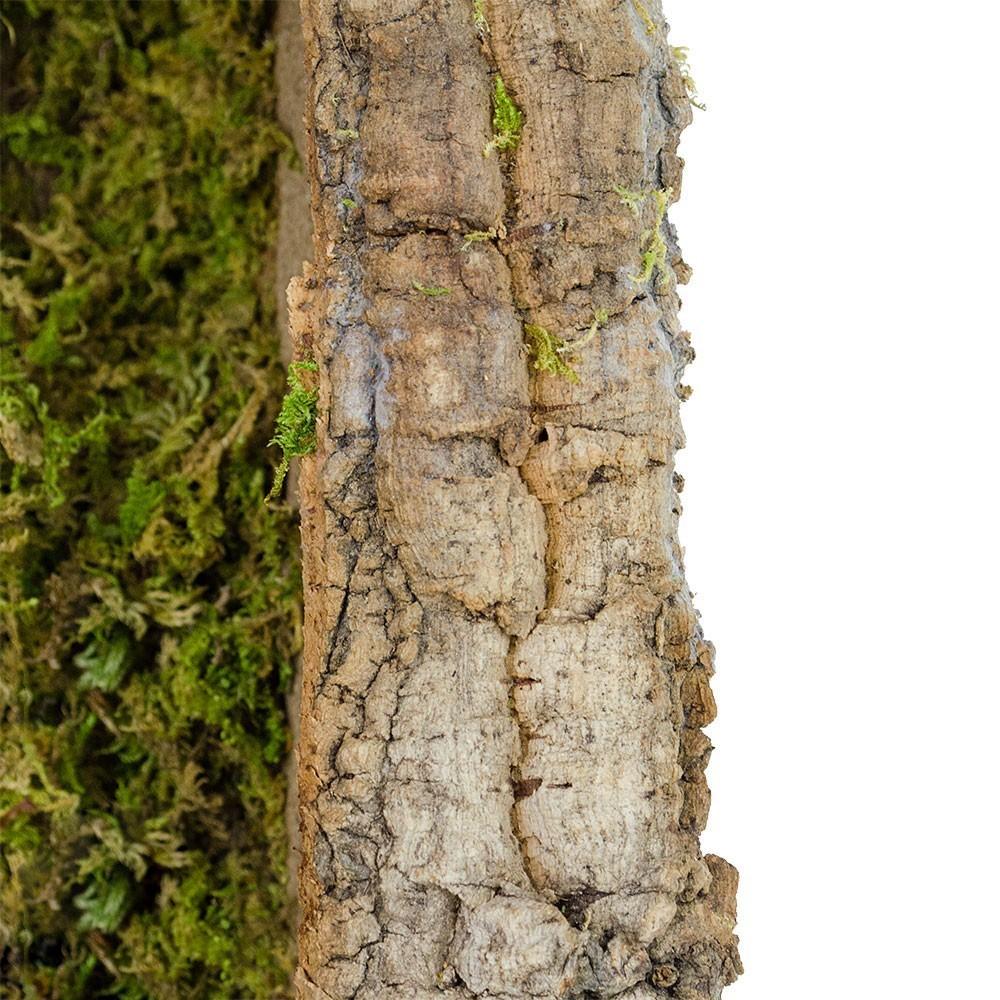 Capanna per la Natività 12 cm
