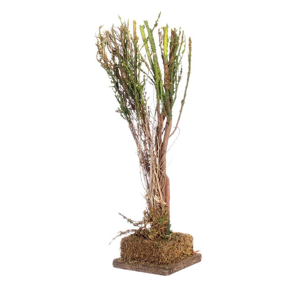 Albero di Saggina H 27 cm per Presepe