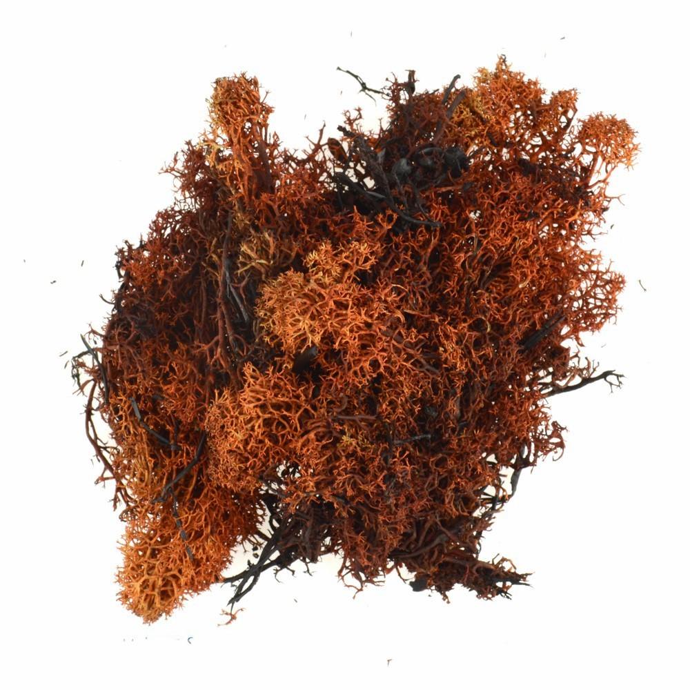 Muschio Lichene Marrone per Presepe 100 gr