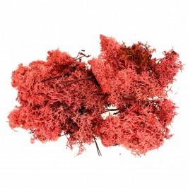 Muschio Lichene Rosso per Presepe 100 gr