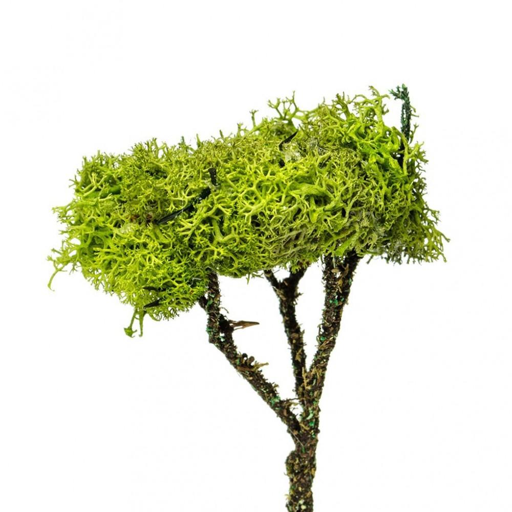 Albero Lichene 16 cm